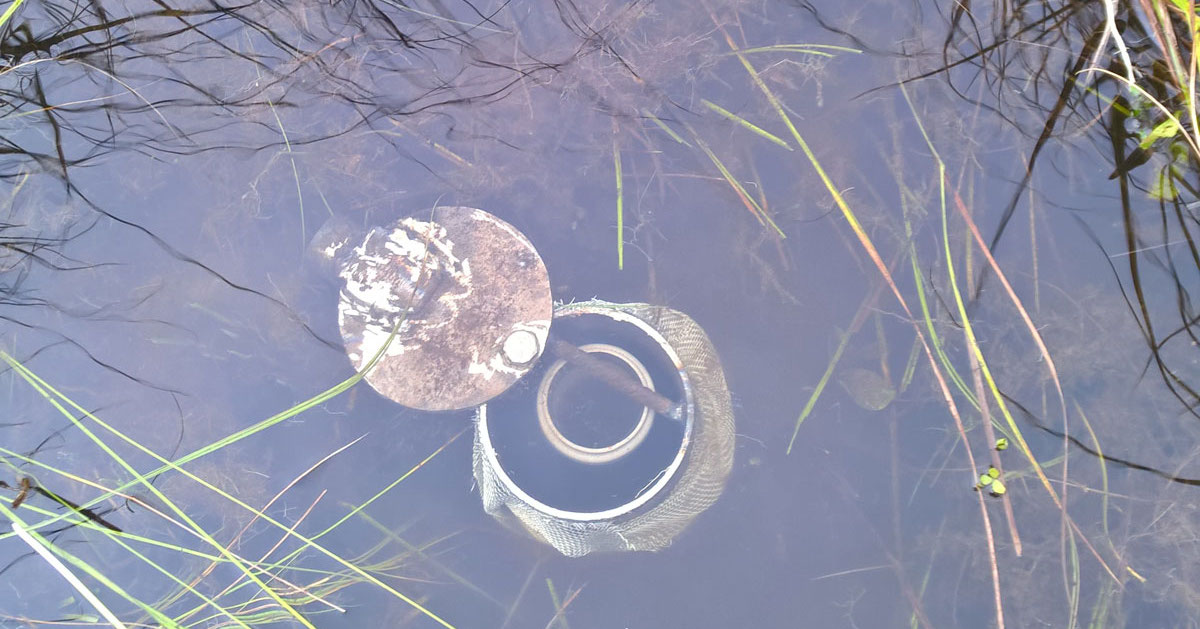 solinst levelogger deployed in monitoring well in wetland